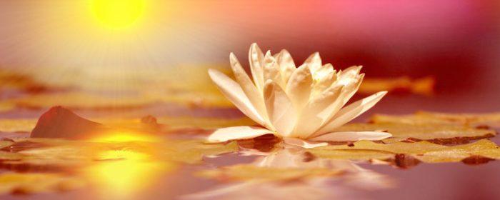 lotus2-800x321.jpg